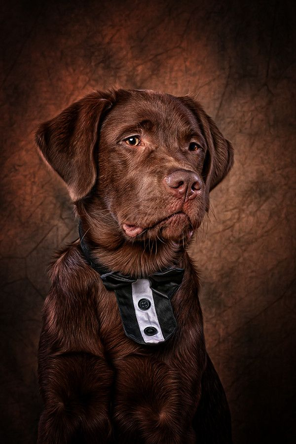 Labrador Neo by Danny Block on 500px