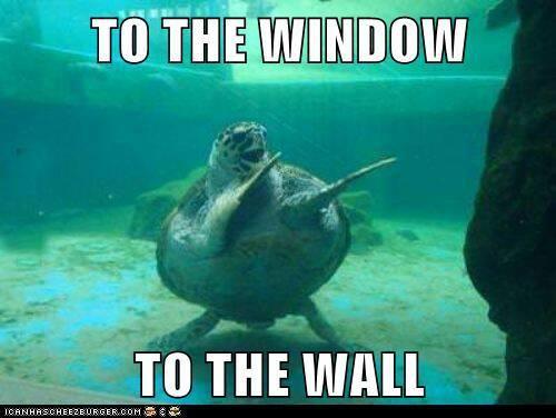 dance quote memes | Funny dancing sea turtle Funny dancing sea turtle