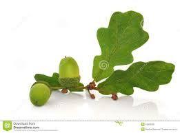 oak leaf - Buscar con Google