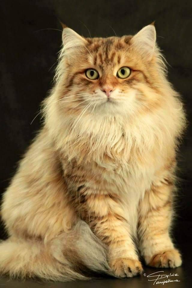 """""""In ancient times cats were worshipped as gods.  They have never forgotten this."""" --Anonymous"""