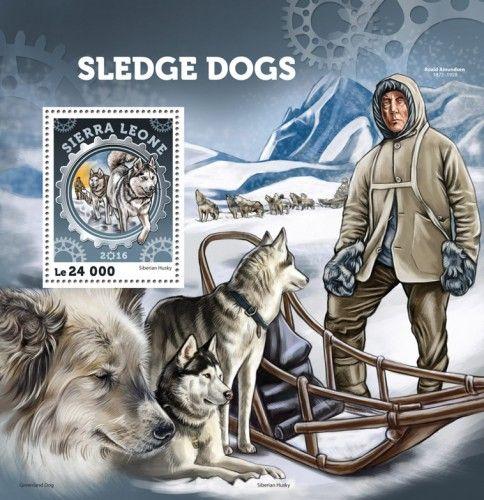 SRL16407b Sledge dogs (Siberian Husky)