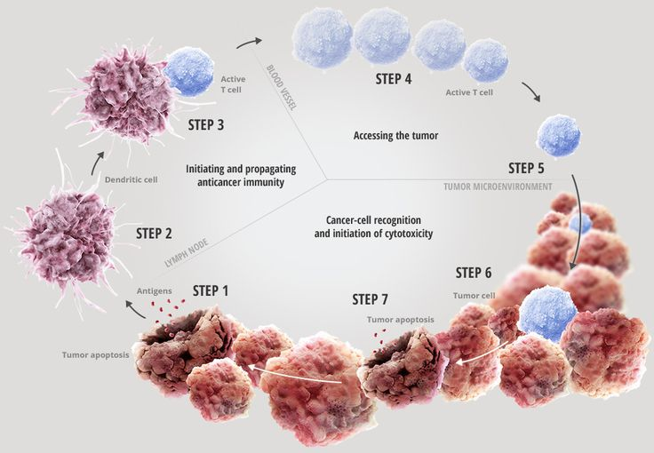 cancer and the immune system essay The immune system essays: over 180,000 the immune system essays, the immune system term papers, the immune system research paper leukemia is a type of cancer.