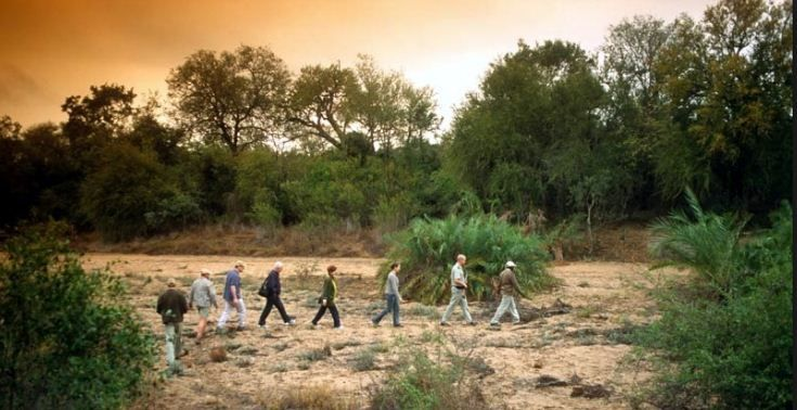 Knowledge is power! Set out on a bush walk with your armed ranger Impodimo Game Lodge and enjoy a close interaction with a variety of bird and wild life. This experience will ensure you gain a unique eye for spotting spoor and learning the art of tracking African game. Call us to book your #mtbedsLuxuryTravel bush walk - 0861 119 119