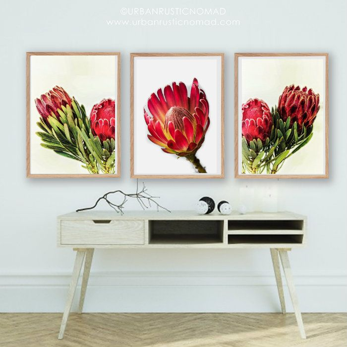 Protea Botanical Native Flower wall art prints - enjoyed creating these as they are indigenous to my home country, and make a striking and impactful wall gallery :) http://etsy.me/2BUpgmG instant download  #protea #proteas #wallart #wallgallery #nativeprint #southafrica #nationalflower #flowers #botanical #green #greenhome #homedecor #interiors #interiordesign #interiordesigninspiration #red #green #floralart #interiordesignideas #urbanrusticnomad #globalinfluence #interiorblogger…