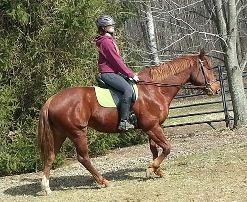 Quarter Horse Mare with many trail miles Ivy is a 5yr 15.1hh chestnut quarter horse mare. Shes registered with papers. She has two years of e