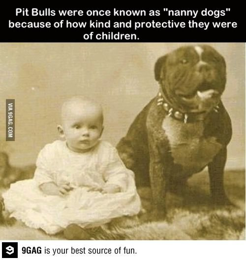 Nanny dogs: Because Pibbles are just that awesome!