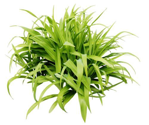 grass (31).png