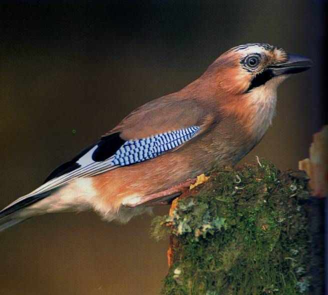 Animal House Ewa Beach: 196 Best Ptaki Images On Pinterest