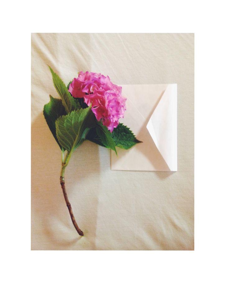 | Petals of love |   #flowerlover #whenhesendsmethis #hortensiaflower #postcardlove #photojournal #vsco #vscojournal #iphonegraphy #liveauthentic
