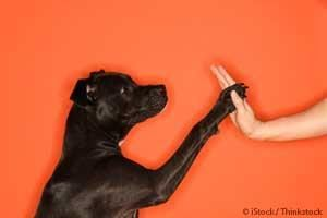 A new study shows that dogs can mimic novel human actions simply by seeing but not actually practicing them. http://healthypets.mercola.com/sites/healthypets/archive/2013/10/07/dogs-remember-events.aspx
