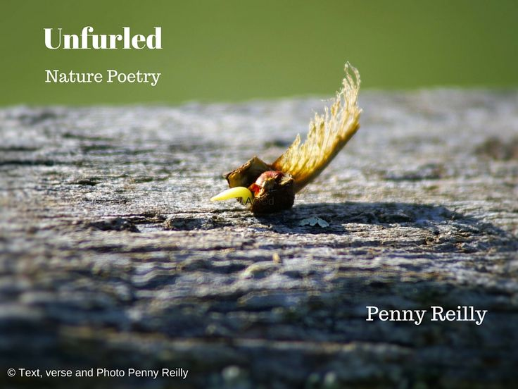 Available from amazon.com worldwide ...my first poetry volume, designed to assist, those who seek a simpler path to find their way. Cover art and text Copyright Penny Reilly