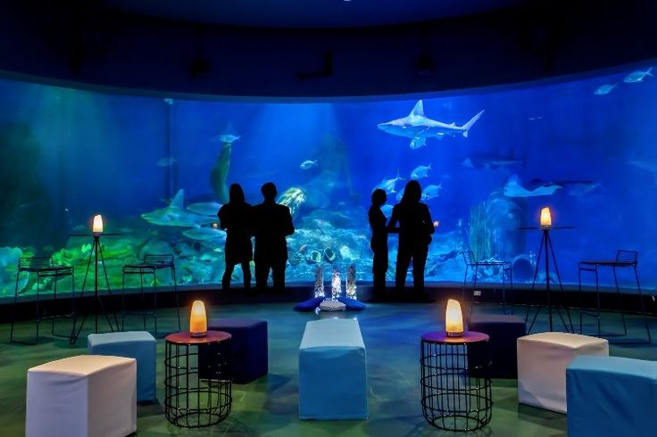 Receive special gifts when you book your next event at SEA LIFE Melbourne Aquarium