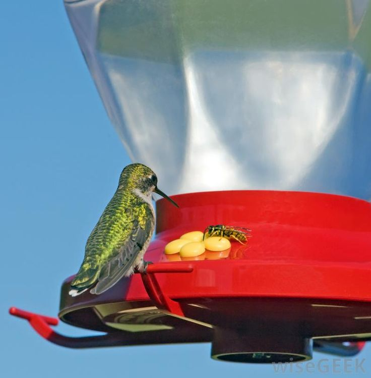Tips to Keep Flying Insects (bees, wasps, hornets) Away from Bird Feeders