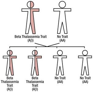 S-beta thal. When these are inherited together, it's BAD because you have MORE S (usually >50%)!  This can be severe.