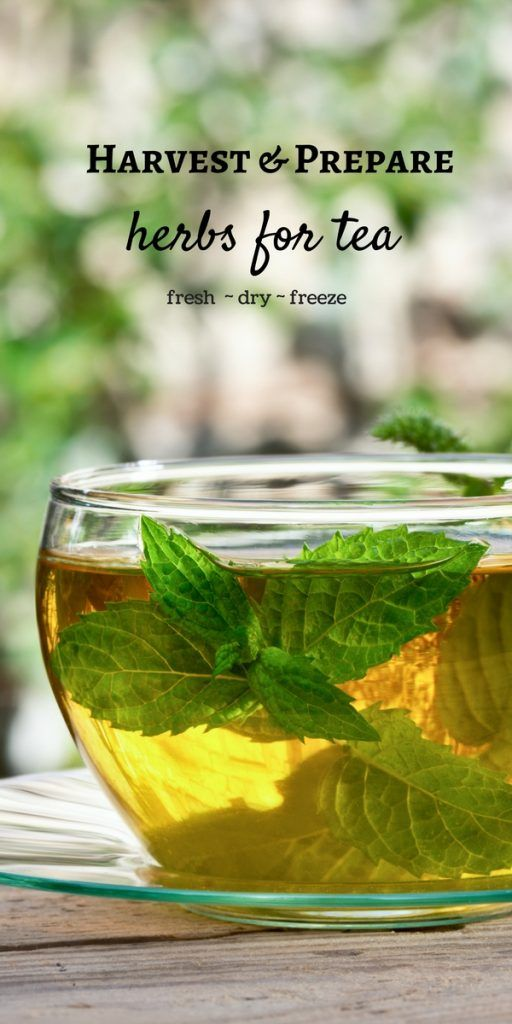 How to Harvest and Prepare Homegrown Herbs for Tea