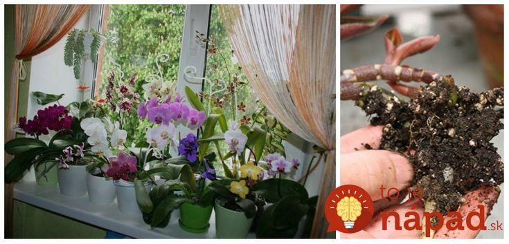 Kvety sú najkrajšie rastliny, ktoré nám zdobia nielen záhrady, ale aj naše domácnosti. Na to, aby naše rastliny prosperovali a rástli do krásy nepotrebujete drahé produkty zo záhradkárstva a umelé hnojivá od výmyslu sveta.