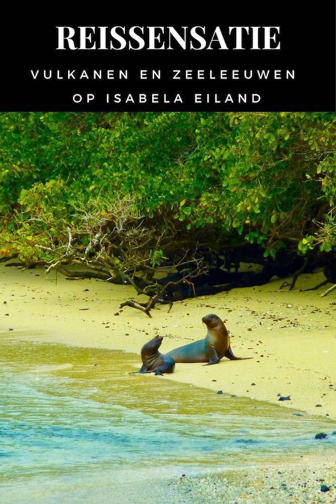 Vulkanen en Zeeleeuwen op het prachtige Isabela eiland Galapagos