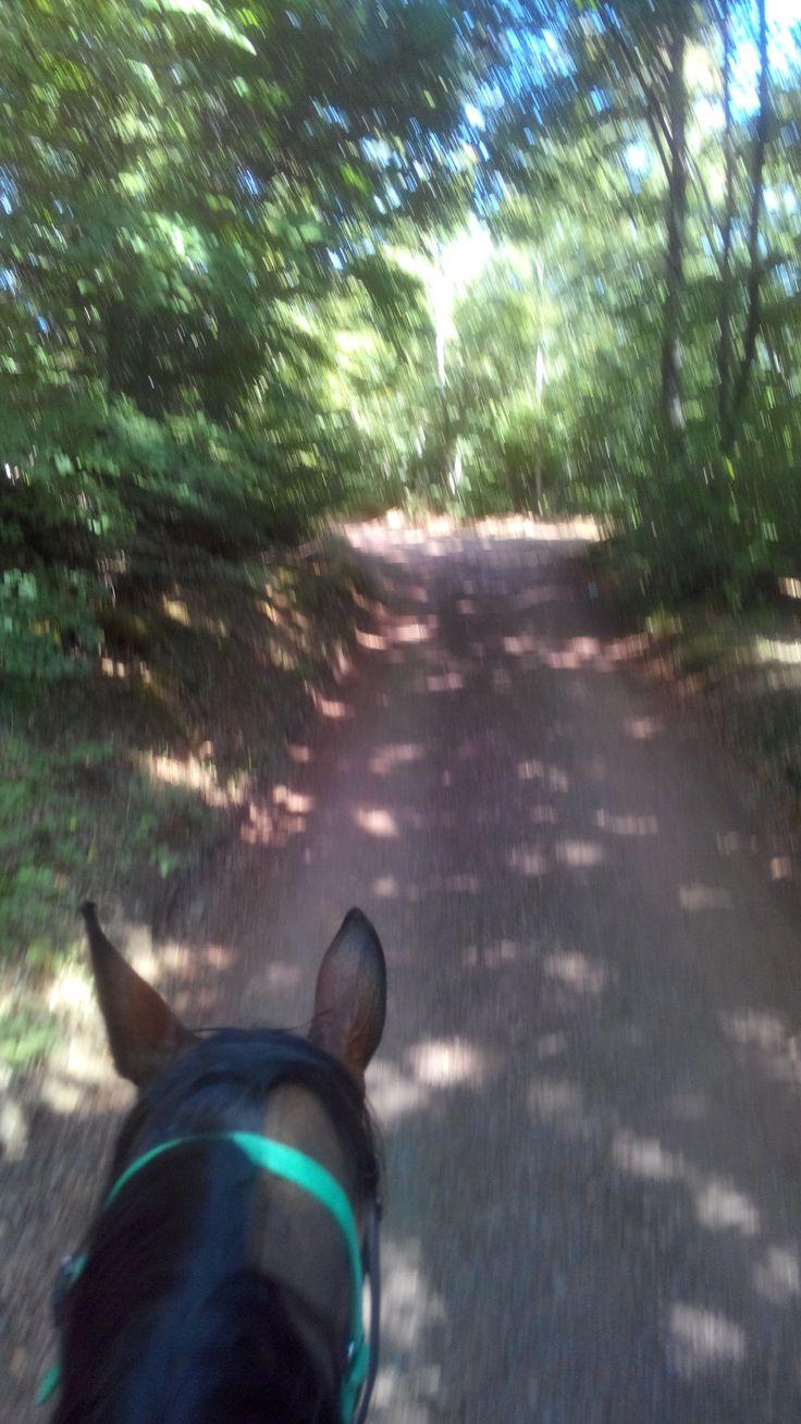 Abbiamo scelto un sentiero veramente comodo per i cavalli e ben mantenuto