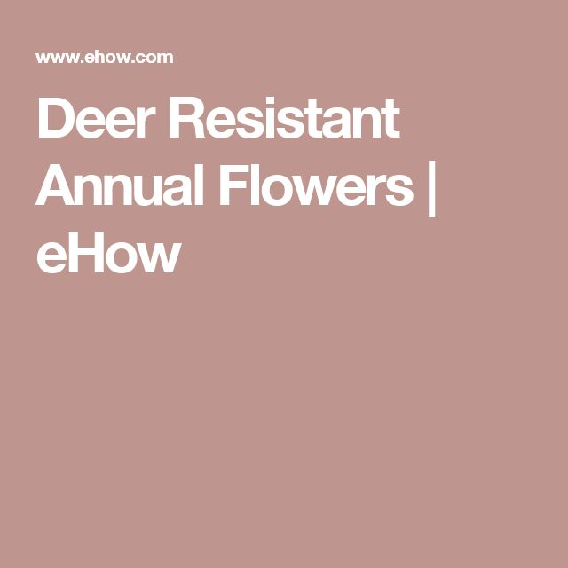 Deer Resistant Annual Flowers | eHow