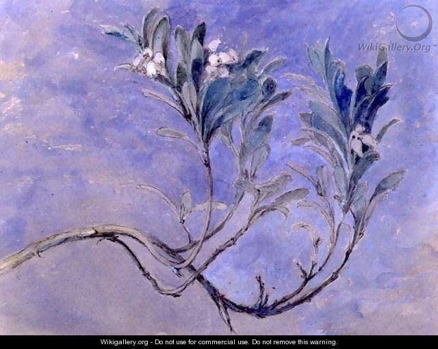 Study of a Sprig of a Myrtle Tree ~ John Ruskin