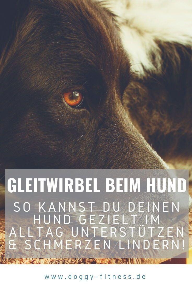 Gleitwirbel Beim Hund Die Spondylosisthesis Alle Fakten Zur Erkrankung In 2020 Hunde Gleitwirbel Erkrankungen