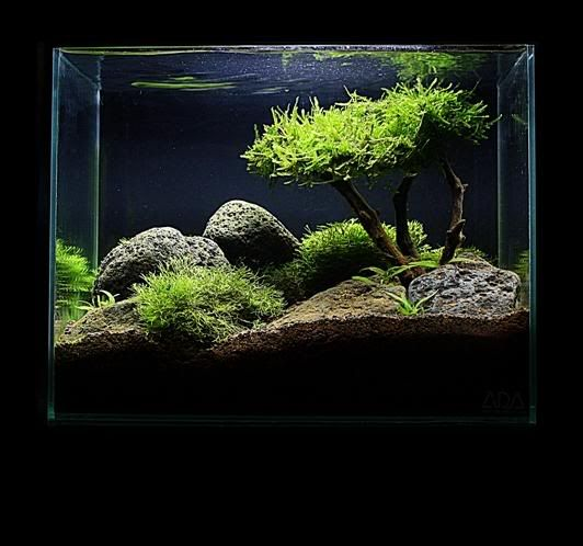 Aquascape Tree: The Intricate Art Of Aquascaping