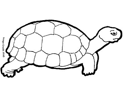 """free printable animal """" turtle """" coloring pages in 2020  turtle coloring pages cartoon clip"""