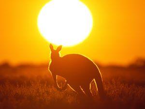Australien Infos kurz - u.a. Australien im Wohnmobil: Von Melbourne über die Great Ocean Road - http://www.brigitte.de/reise/reiseberichte-und-infos/reiseziele/australien-wohnmobil-melbourne-adelaide-532549/