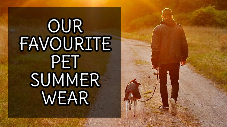 """Man it's getting hot out there! Why not check out these hot summer wear for pets! - Pets Overload // Pets Overload \\ Pet Blog // Pet Product Reviews \\ Pet Training Tips // """"Tank Tops Camouflage Cotton Teddy Tank Top Love army wear? Got some camo pants lying around the house? Why not get your puppy a tank to match?  West Coast Tank Top Whether youre from the West Coast or not why not get your pup to represent in this stylish tank. Favourite thing about it? """" View the full post here…"""