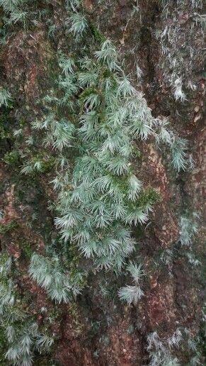 Spagnum moss at Curug Nangka...