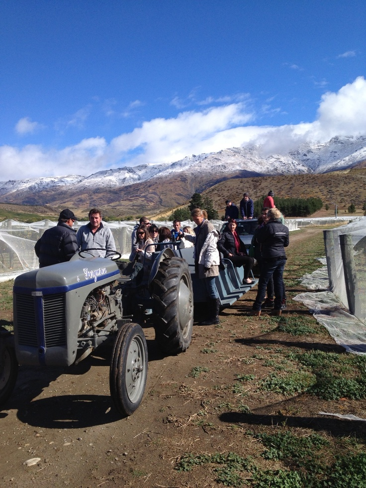 Annual trade harvest lunch tractor ride Amisfield. cool tractor!