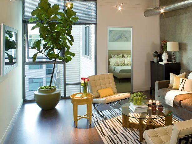 love how they make small urban spaces look comfy by using small furniture and accenting the wall with texture: Modern Living Rooms, Hanging Lights, Leaf Figficus, Track Lights, Small Living Rooms, Figficus Lyrata, Apartment Ideas, Fiddle Leaf, Loft Design