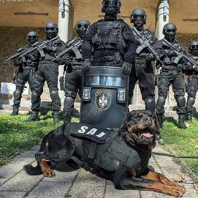 An introduction to the importance of canines of the police force police dogs