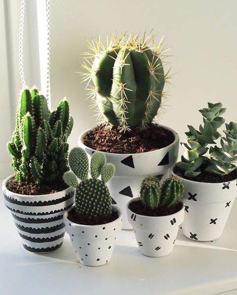 Lovely Cacti In White Ceramic Pots Which Make The Space More