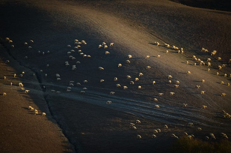 moutons-sheep_4225