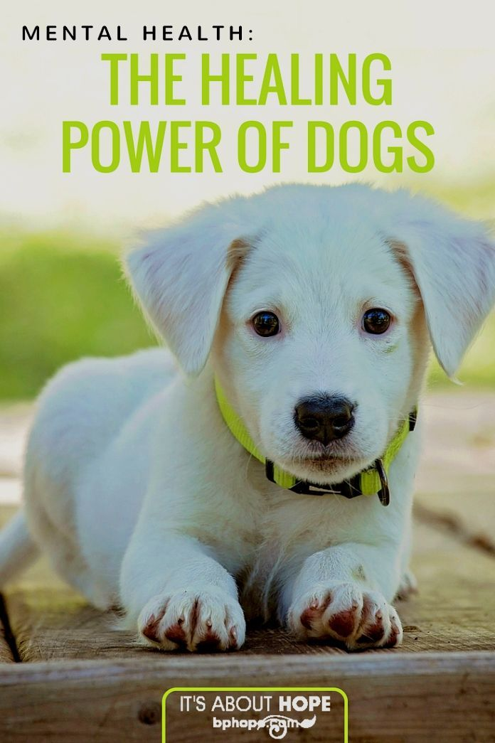 Dog Training Guide Puppy Training Strategies For The New Dog