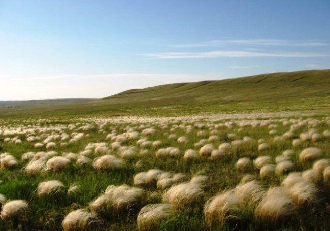 Местные жители утверждают, что шаровых молний периодически появляется несколько, и, летя, они прожигают себе дорогу сквозь даже очень толстые стволы деревьев. Источник: http://set-travel.com/world/item/674-medveditskaya-gryada