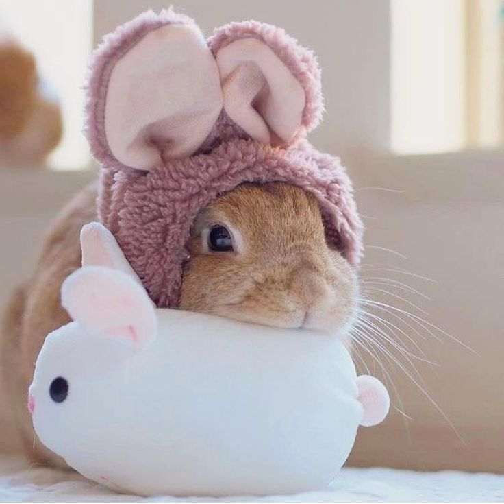 Is that a bunny in a bunny suit laying on a bunny plush toy?
