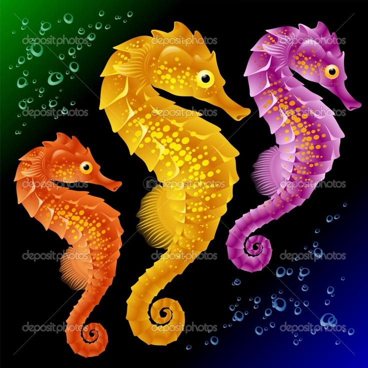 seahorses                                                                                                                                                                                 More