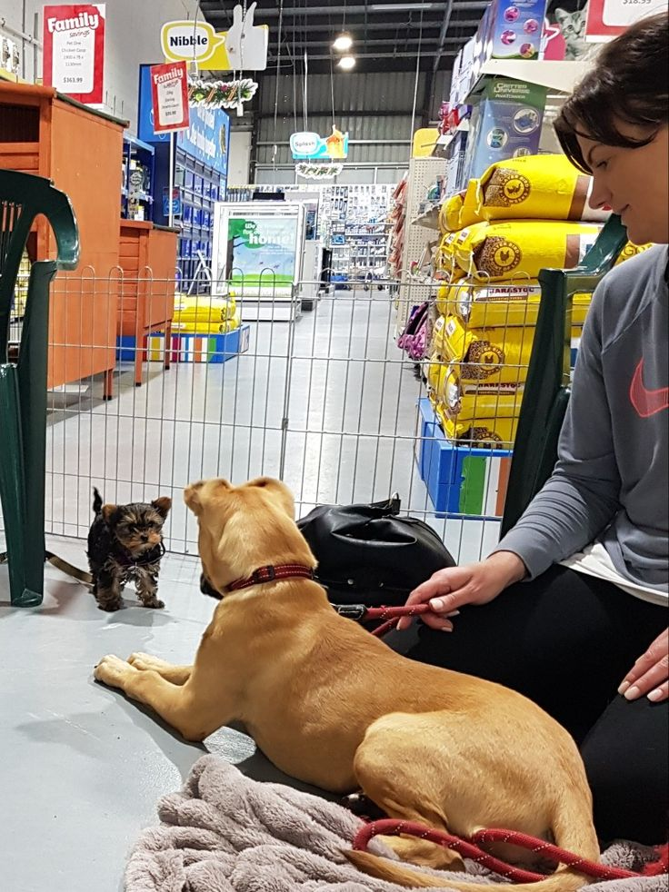 Meeting new friends at Puppy School