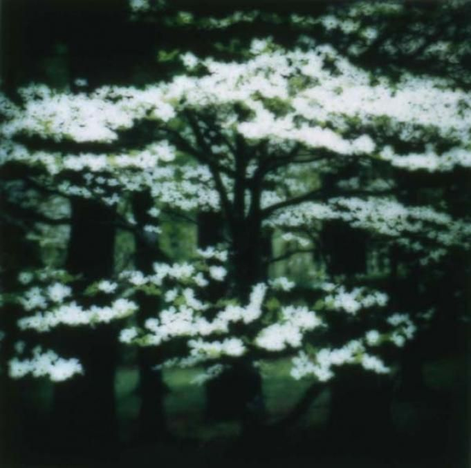 LYNN GEESAMAN - White Dogwood, Kentucky (4-03-32c-10), 2003