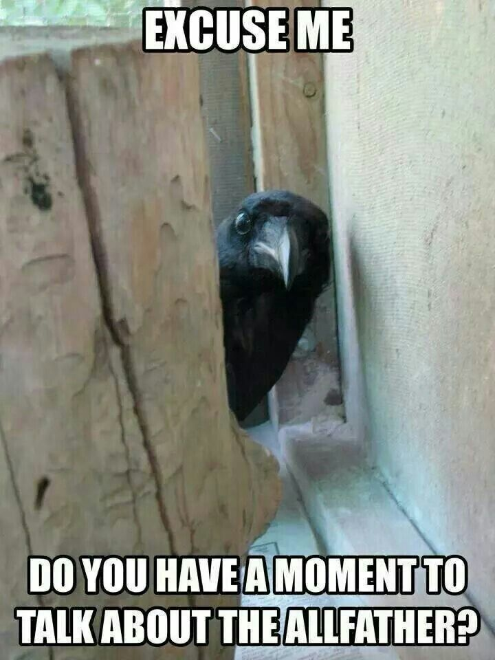 crow evangelising the allfather (I'd let this fellow through my door, before any jehovah's witness!)