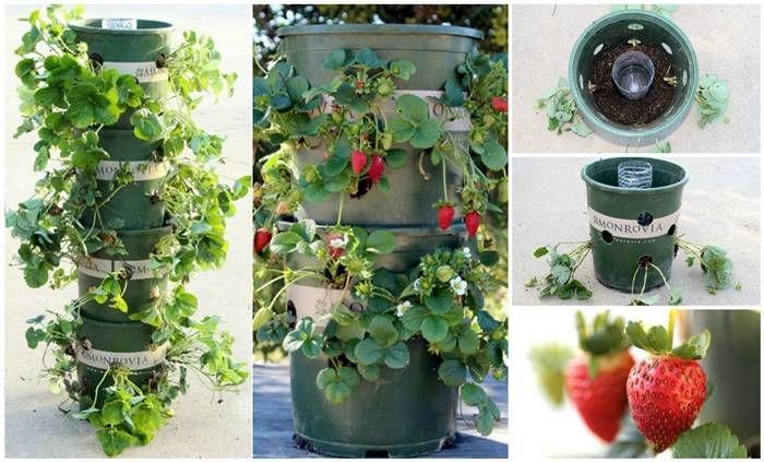 Creative Ideas - DIY Strawberry Tower With Reservoir #DIY #garden