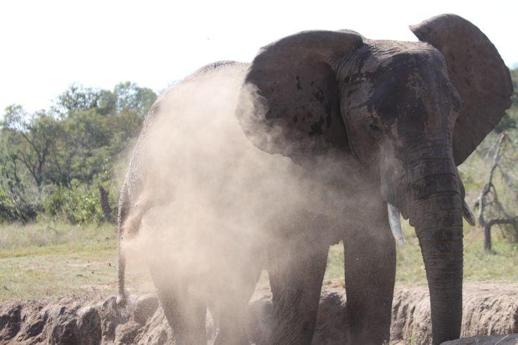 Loving the dust bath.