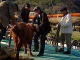 E8 Edwardian Farm - Video Dailymotion
