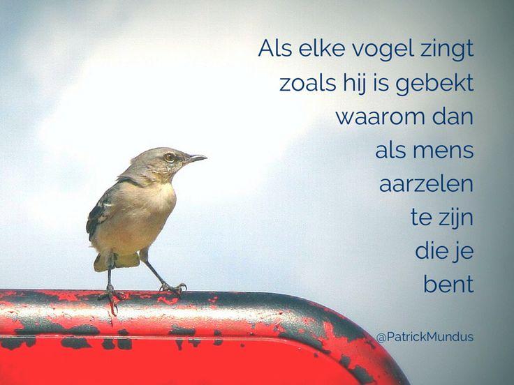 Citaten Over Zingen : Beste ideeën over vogel citaten op pinterest vleugel