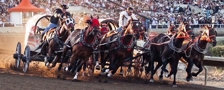 Gmc Rangeland Derby Calgary Stampede 2012 Calgary