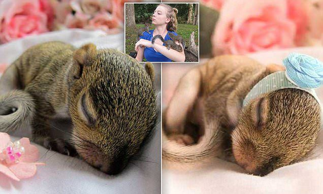 Woman celebrates baby squirrel's survival with photo shoot