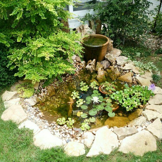 mi-さんの、ホテイソウ,睡蓮,手作りの池,DIY,玄関/入り口,のお部屋写真