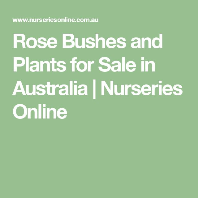 Rose Bushes and Plants for Sale in Australia | Nurseries Online